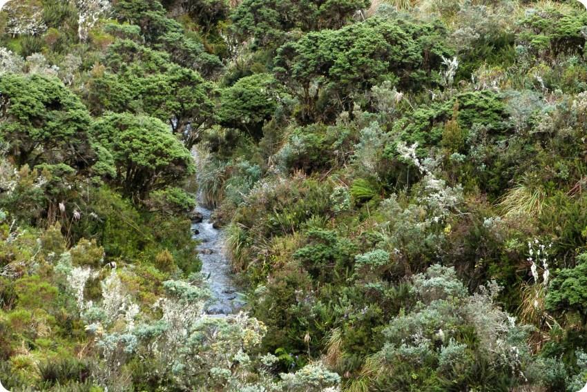 curso de agua en el paramo en el parque natural Puracé