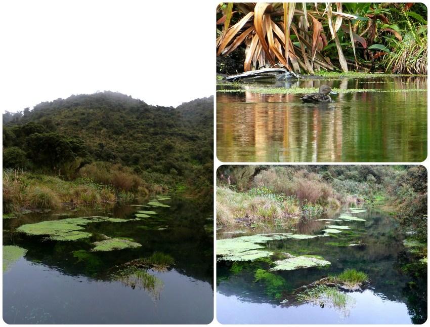 curso de agua en el Parque natural Puracé