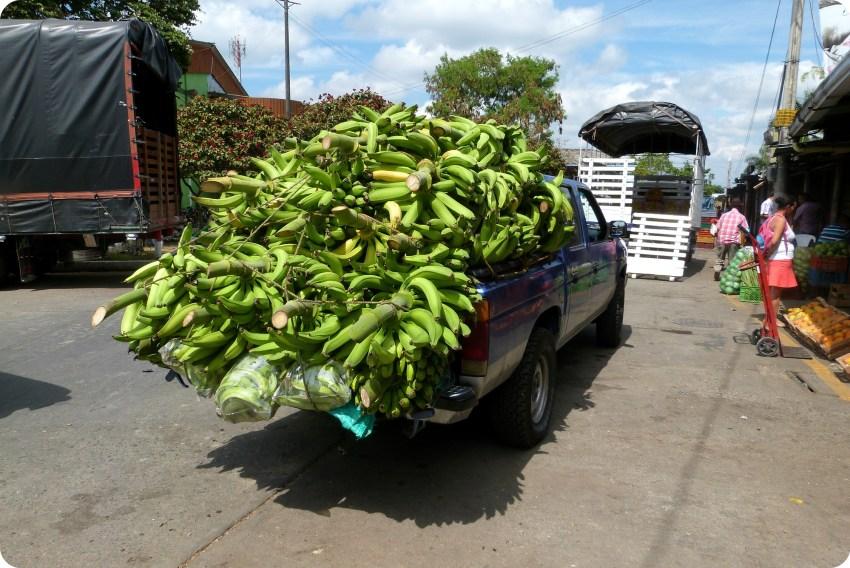 Pieds de bananes plantain dans une jeep au marché d'Armenia
