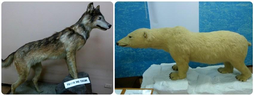 Animales expuestos en el Museo de historia natural de Popayán