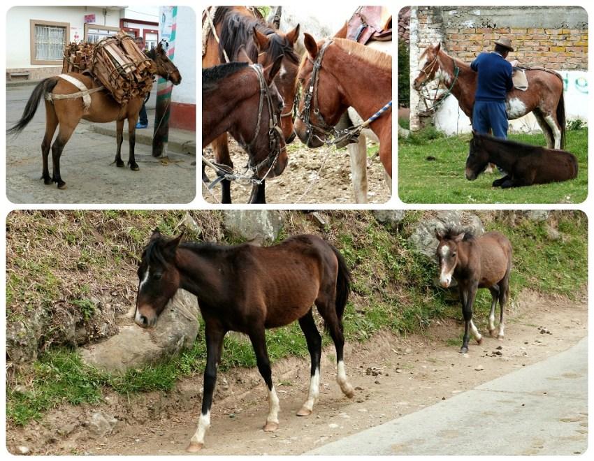 chevaux à silvia