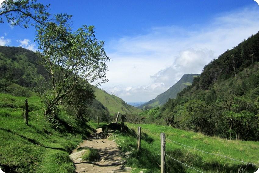 vieil arbre sur un chemin de la vallée de Cocora