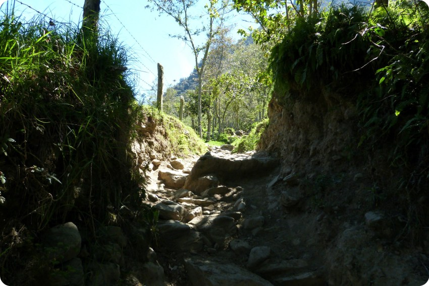 sombra de los árboles en un camino del valle de Cocora