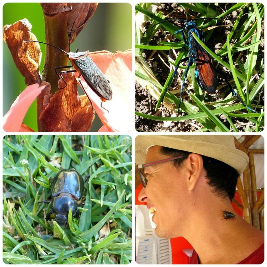 insectos en Aguas Tibias de Coconuco : Pepsini