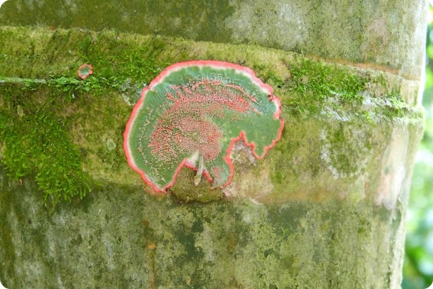 Liquen sobre la guadua en el jardín botánico del Quindío en Calarcá
