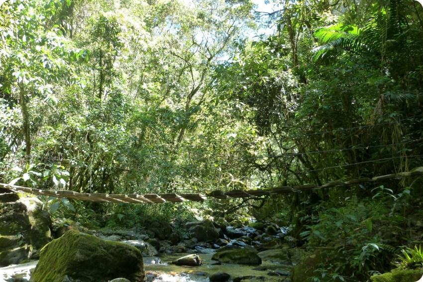 Pequeño puente encima del río Quindío en el valle de Cocora