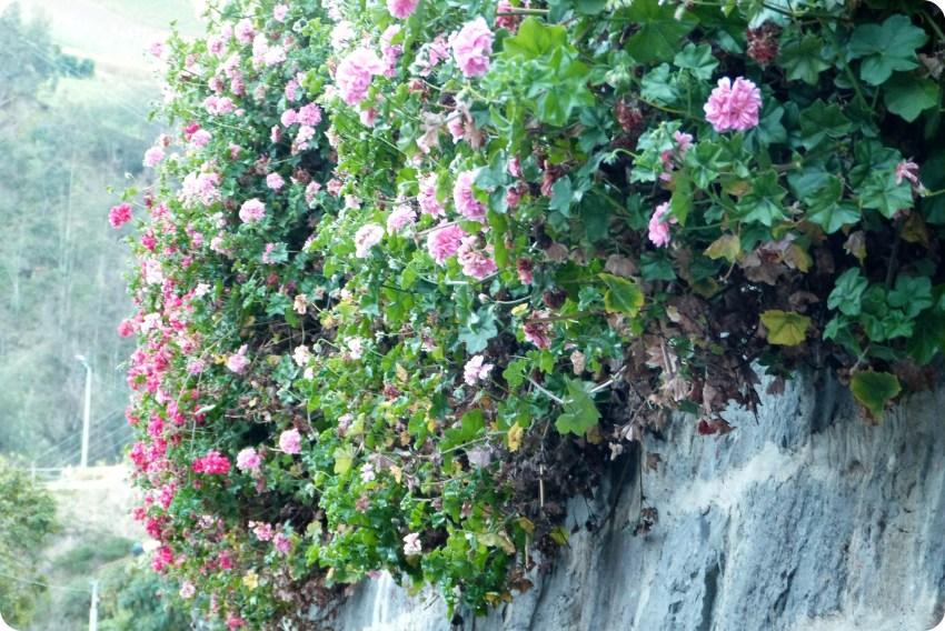 flores en el Santuario de las Lajas de Ipiales