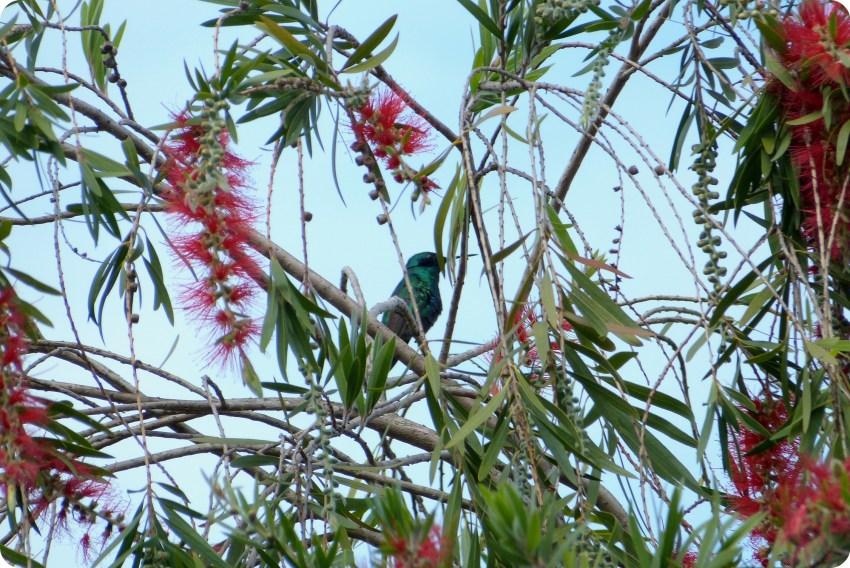 colibri dans un arbre à la Mitad del Mundo de Quito