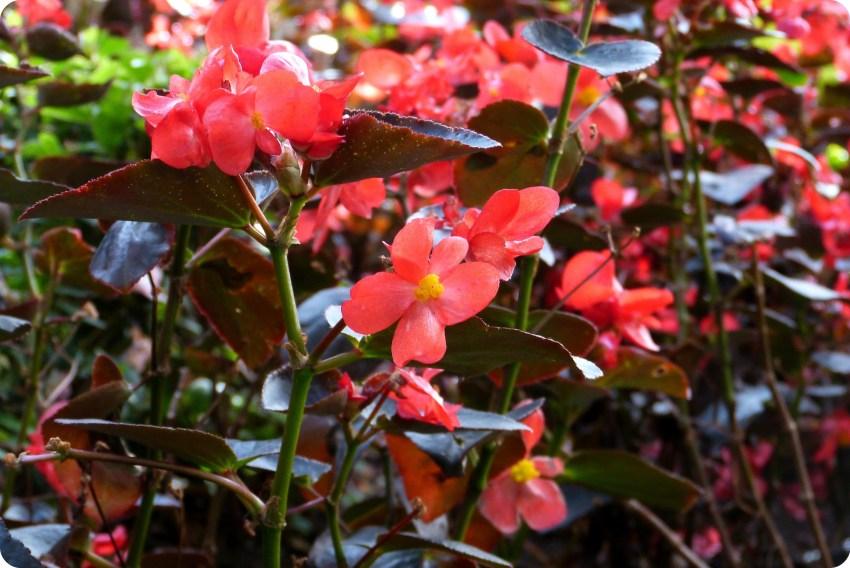 fleurs dans le patio du Museo Botero de Bogotá