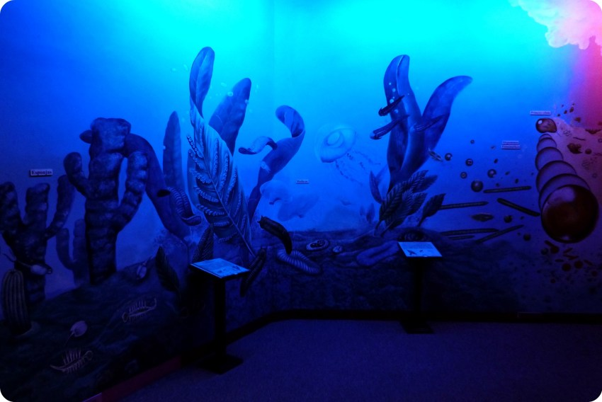 océano representado en el Museo de Historia natural de Quito