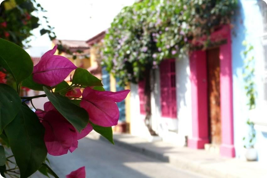 enfoque sobre las flores rosas y vista al fondo de hermosas casas coloridas (rosa, blanco, azul) en Cartagena