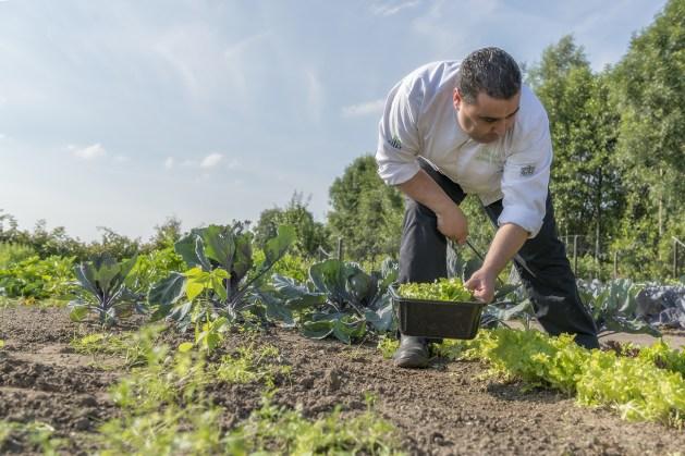 Chefkok Mourad kweekt zijn eigen groenten