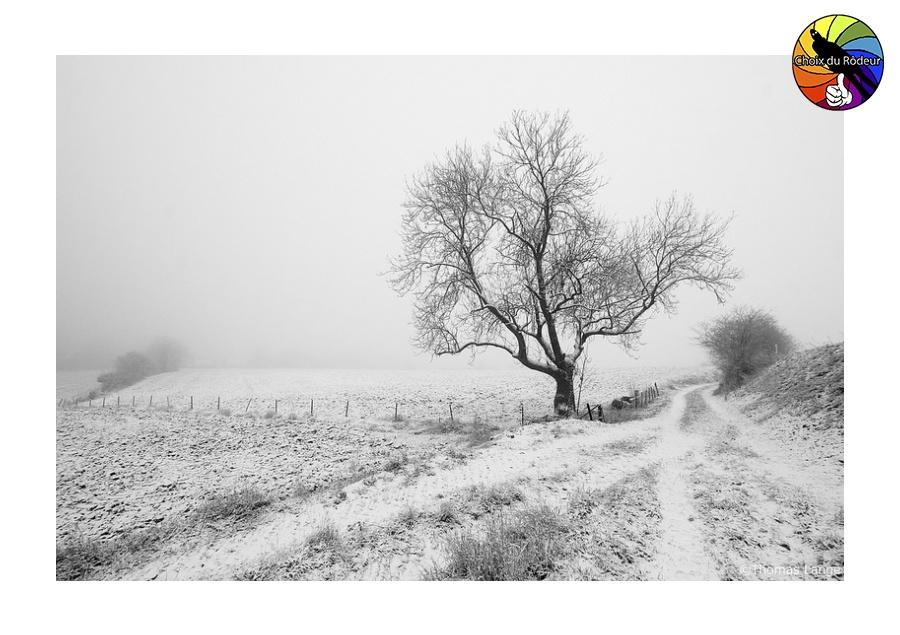 2017, Forum, Instinct-Photo, ToLa, Photo, Rôdeur, Sélection, paysage, N&B, neige Arbre, hiver, champs
