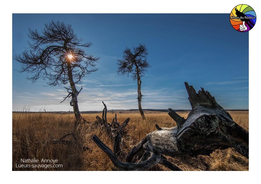 2017, Instinct-Photo, forum, photo, rôdeur, sélection, Odonath, arbre, contre-jour, nature, lande, tourbière