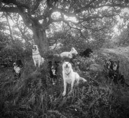 Instinct de Chien - Education, rééducation canine à domicile en Drôme Ardèche - Comportementaliste sur Montélimar et Aubenas - Balade collective