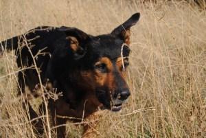 Instinct de Chien - Education, rééducation canine à domicile en Drôme Ardèche - Comportementaliste sur Montélimar et Aubenas - Boutique accessoire et croquettes