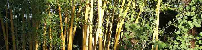 Eutonie-bambous