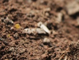 soil-3252856_1920