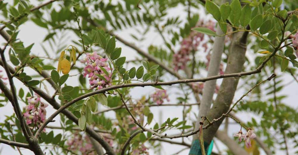As 6 leguminosas mais importantes para o Agronegócio brasileiro