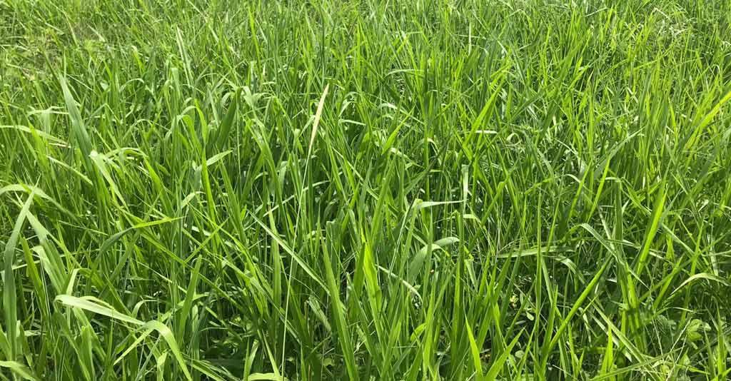 Plantas de cobertura: o guia completo para a utilização no Plantio Direto