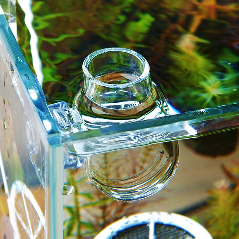 Clear Glass Bubble Crystal Shrimp Fish Bowl Feeding Cup Basin Plant Tank Fashion  eBay