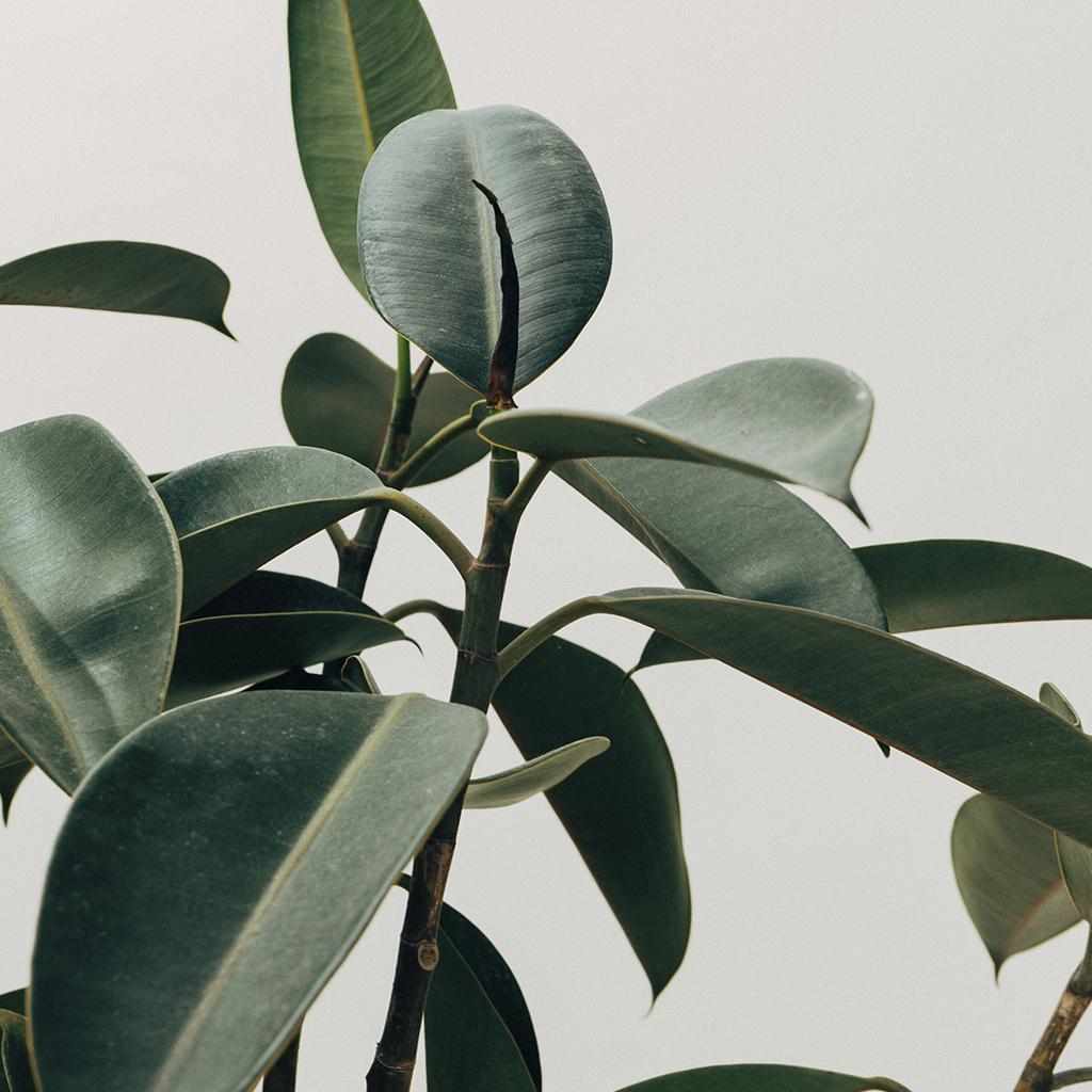 Cómo cuidar tus plantas según Pinterest