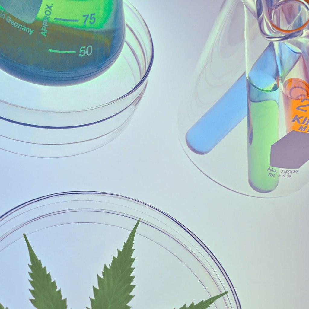 CBD: el componente  derivado del Cannabis que debes incluir en tu rutina