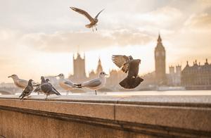 UK Insurance Companies List