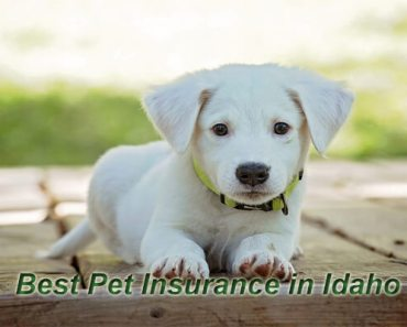 Pet Insurance in Idaho