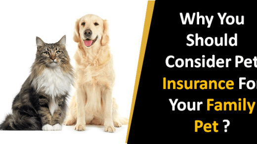 Why You Should Consider Pet Insurance For Your Family Pet