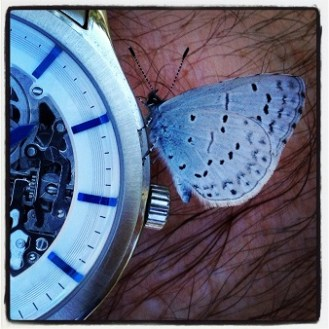 Butterfly on my watch on the South Fork American River Trail