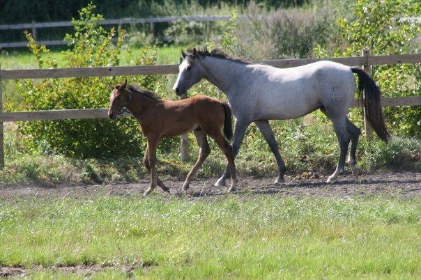 Julies heste