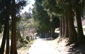 Туристическая ферма Цин-Цзин