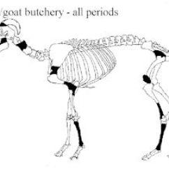 Sheep Skeleton Diagram Suzuki Df140 Wiring Internet Archaeol 40 Atkinson And Preston The Late Iron Age Figure 636 Goat Areas Where Butchery Marks Were Located From Elms Farm Heybridge Essex