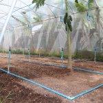 โครงการการสร้างต้นแบบระบบชลประทานพลังงานแสงอาทิตย์แบบอัจฉริยะสำหรับเกษตรอินทรีย์