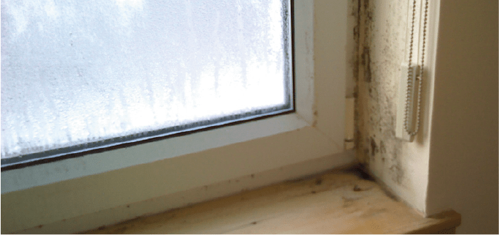 What Causes Mould in the home?