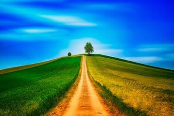 Way Through Field