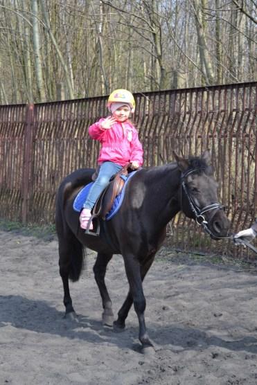 konie kinga