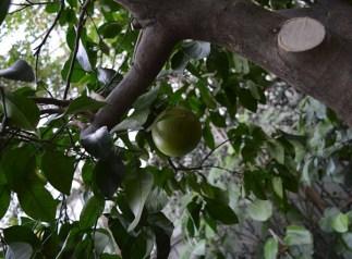 palmiarnia rosliny 1