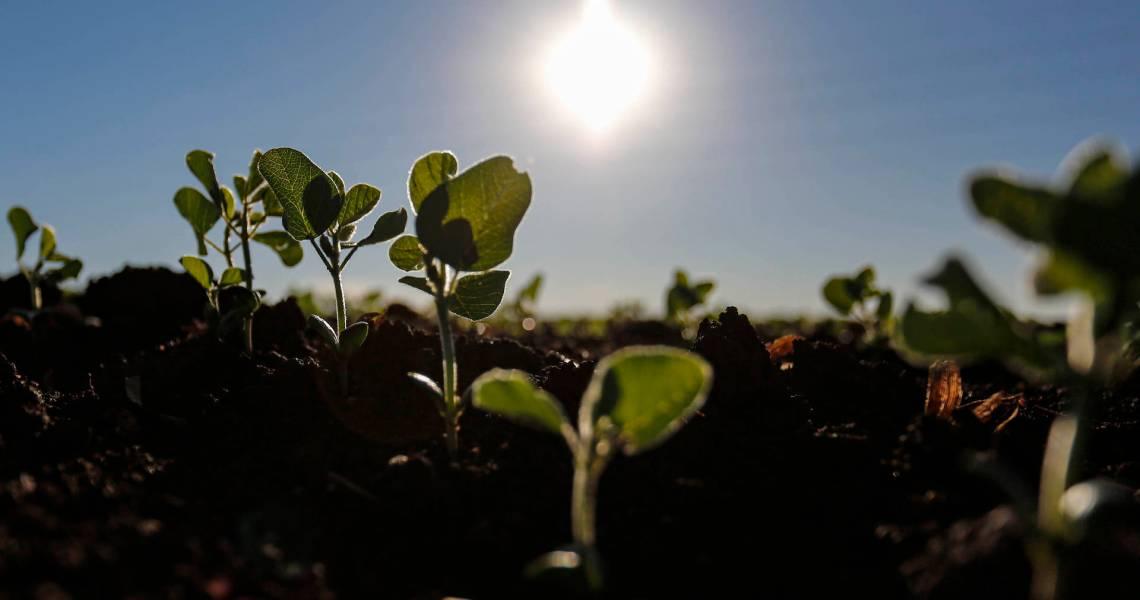 Paraná – começa o plantio da soja. Área pode chegar a 5,62 milhões de hectares