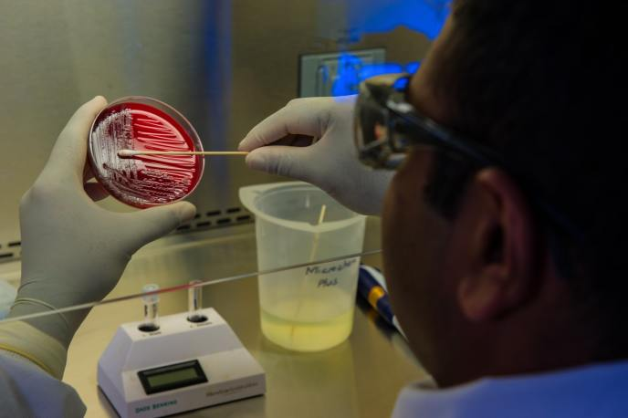 """A lab member swabbing a petri dish. He may be trying to answer the question """"Can you catch COVID-19 twice""""?"""