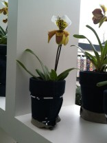 White and yellow/brown orchids in pot covers made from recycled jeans