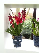 Dark pink orchids with yellow centres in pot covers made from recycled jeans