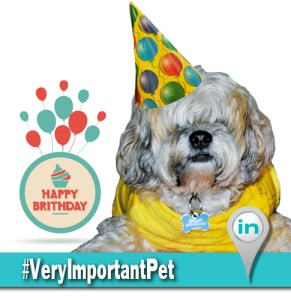 VeryImportantPet IN8 05-02-2014