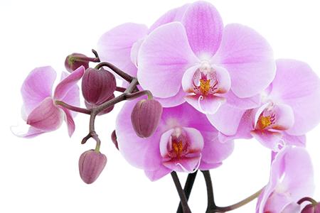 orchids fest miami integrate news festival orquideas miami 2