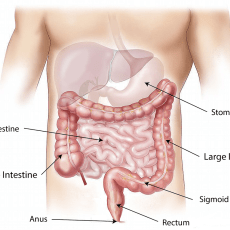 Is Bacterial Overgrowth in Your Small Intestine Making You Sick?