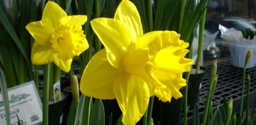 March Lawn & Garden To-Do List