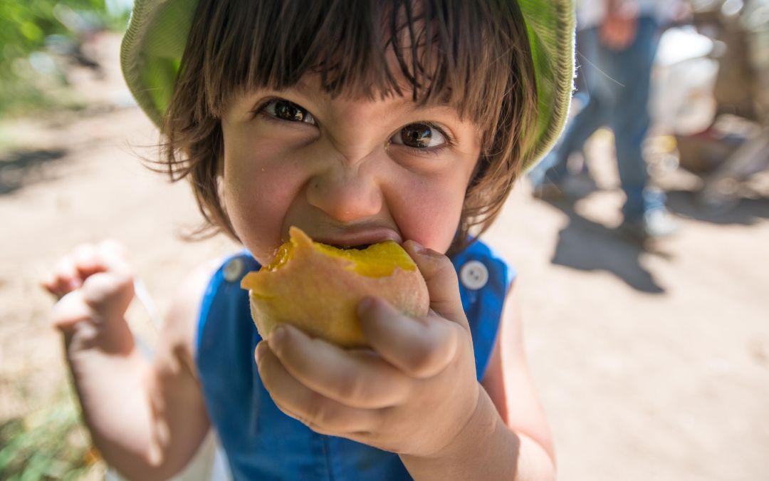 Sink your teeth into Schnepf Farms Peach Festival