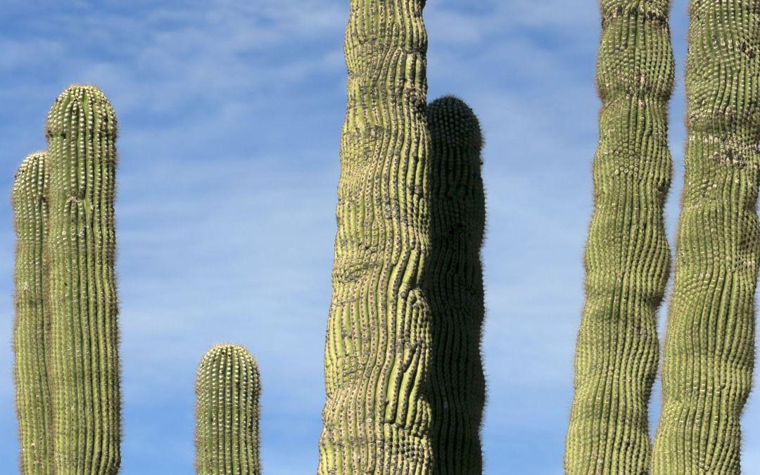 Hiker alert: 3 trailheads getting upgrades in Scottsdale's McDowell Sonoran Preserve
