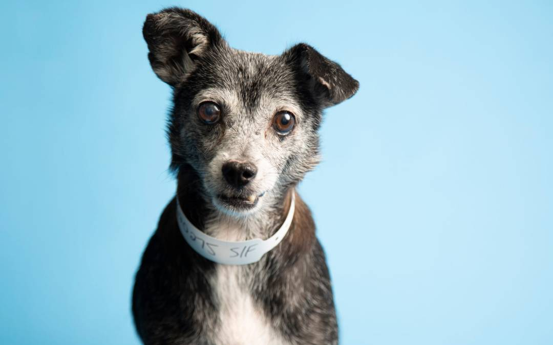Gladys and more in Phoenix-area shelters this week